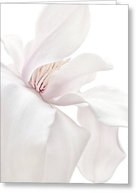 Purity White Magnolia Flower Blossom Greeting Card by Jennie Marie Schell