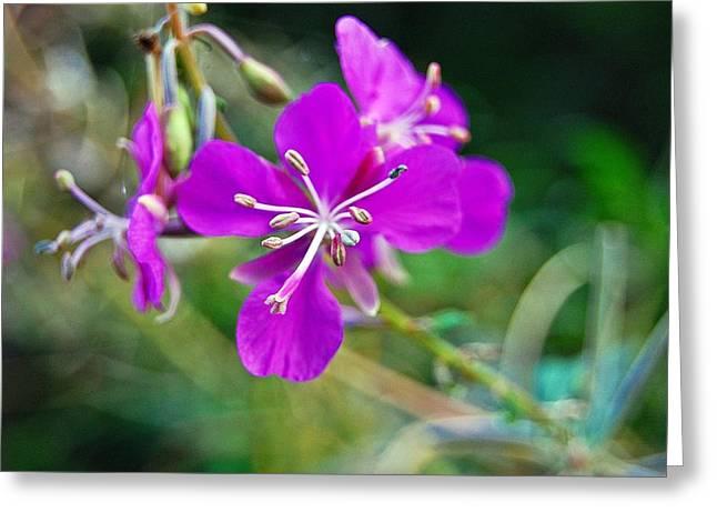 Purlple Greeting Cards - Purple 2 Greeting Card by Jennifer Haggerty