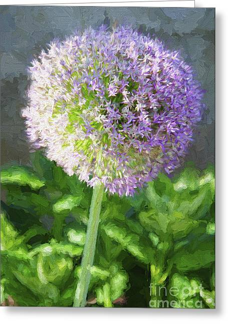 Allium Hollandicum Greeting Cards - Purple Allium 3 Hollandicum Sensation  Greeting Card by Andee Design
