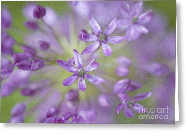 Allium Hollandicum Greeting Cards - Purple Allium Flower Greeting Card by Juli Scalzi