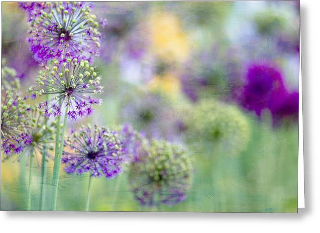 Purples Greeting Cards - Purple Allium Greeting Card by Rebecca Cozart