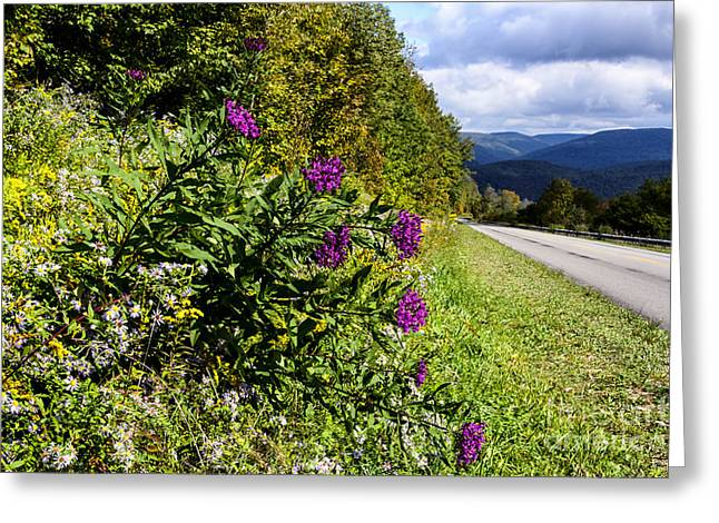 Aster Greeting Cards - Purple along the Road Greeting Card by Thomas R Fletcher