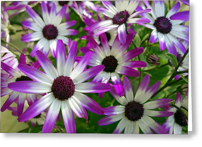 Flower Photos Greeting Cards - Purple and White Flowers Greeting Card by Ann Powell