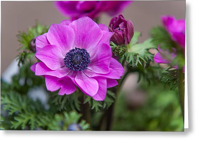 Amsterdam Market Greeting Cards - Purple Anemone. Flowers of Holland Greeting Card by Jenny Rainbow