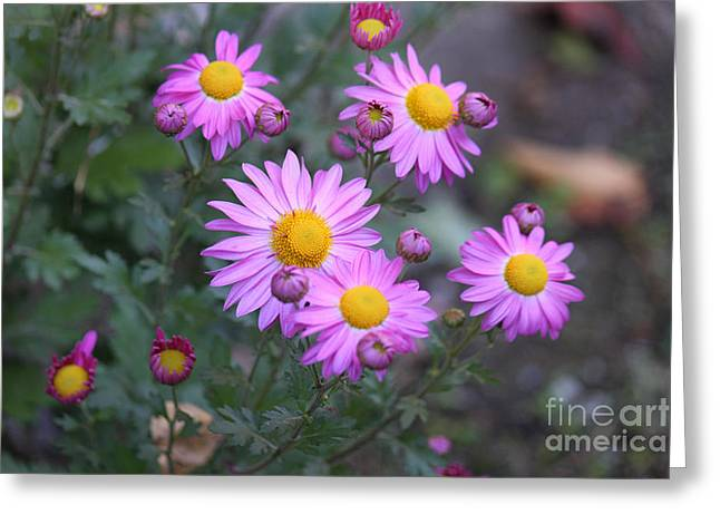 Purple Asters Greeting Card by Lena Auxier