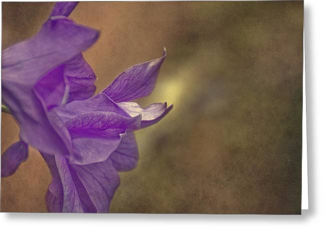 Balloon Flower Greeting Cards - Purple Balloon Flower Greeting Card by Mel Hensley