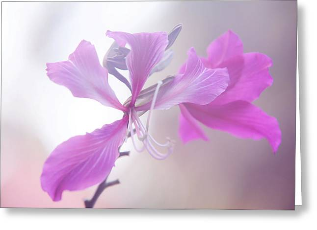 Spa Center Greeting Cards - Purple Bauhinia. Flowers of India Greeting Card by Jenny Rainbow