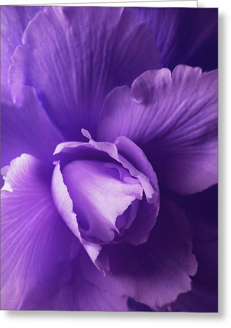 Purple Begonia Flower Greeting Card by Jennie Marie Schell