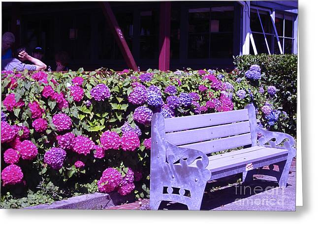 Sit-ins Greeting Cards - Purple Bench Pink Hydrangea Greeting Card by Kym Backland