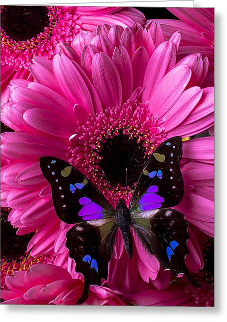 Purples Greeting Cards - Purple Black Butterfly Greeting Card by Garry Gay