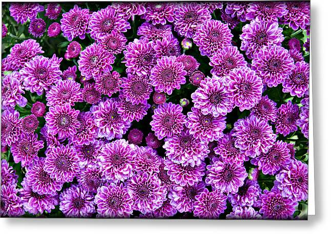 Outdoor Life Art Prints Greeting Cards - Purple Blanket Greeting Card by Ricky Barnard