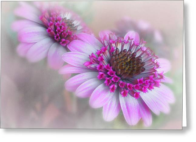 Purple Blooms Greeting Card by David and Carol Kelly