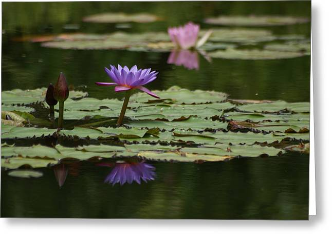 Pinks And Purple Petals Photographs Greeting Cards - Purple Blossoms Floating Greeting Card by Patricia Twardzik