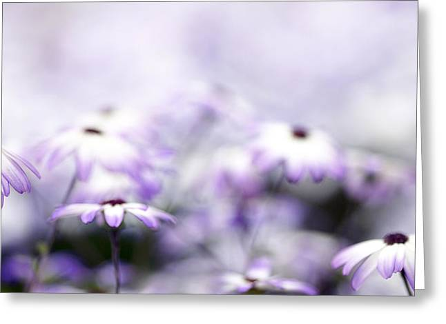 Dreamy Photographs Greeting Cards - Purple Bokeh Greeting Card by Rebecca Cozart