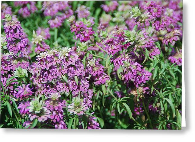 Local Food Photographs Greeting Cards - Purple Bounty Greeting Card by Myscha Theriault