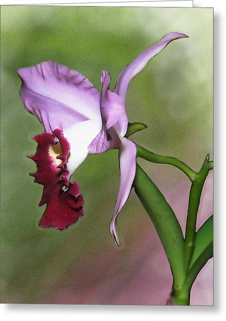 Cattleya Greeting Cards - Purple Cattleya Orchid in Profile Greeting Card by Elaine Plesser