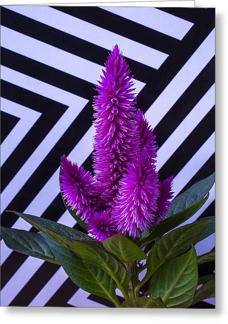 Purples Greeting Cards - Purple Celosia Greeting Card by Garry Gay