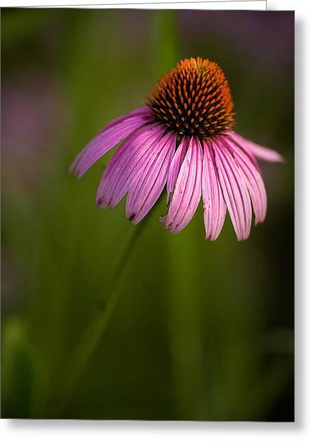 Onyonet Photo Studios Greeting Cards - Purple Cone Flower Portrait Greeting Card by  Onyonet  Photo Studios
