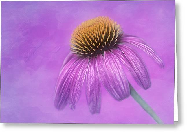 Tone On Tone Greeting Cards - Purple Coneflower - Echinacea purpura Greeting Card by Nikolyn McDonald