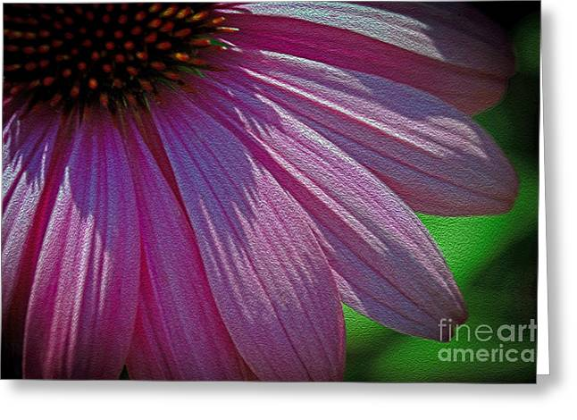 Mothersday Greeting Cards - Purple Coneflower Greeting Card by Tom Gari Gallery-Three-Photography