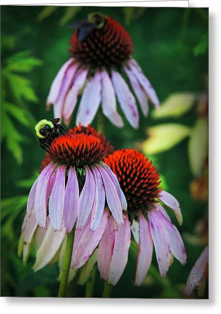 Aster Greeting Cards - Purple Coneflowers 001 Greeting Card by Lance Vaughn
