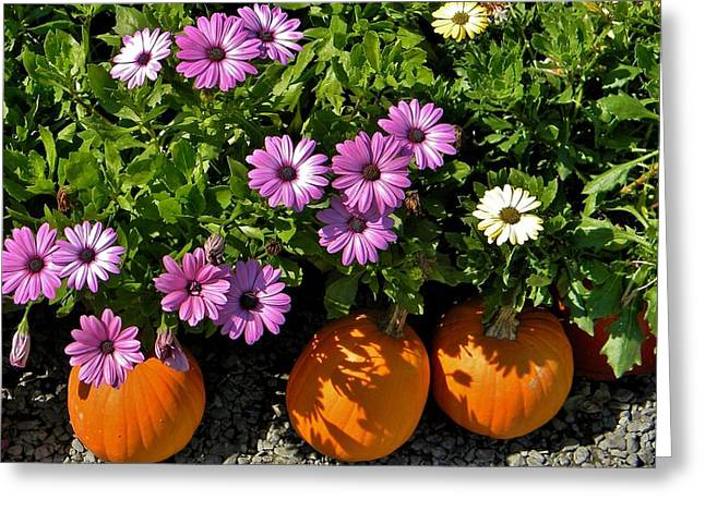 Purple Daisies And A Touch Of Orange Greeting Card by Jean Goodwin Brooks
