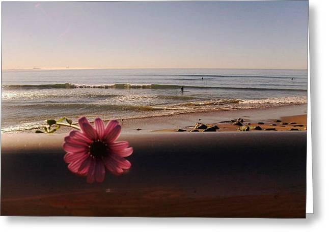 Ventura California Greeting Cards - Purple daisy in Ventura Greeting Card by Keeley Chevrier