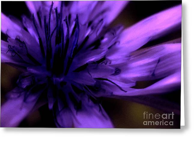Purple. Wild Orchid Greeting Cards - Purple Dance Greeting Card by Molly McPherson
