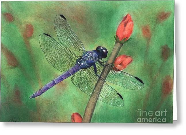 Dragonflies Pastels Greeting Cards - Purple Dragonfly Greeting Card by Christian Conner