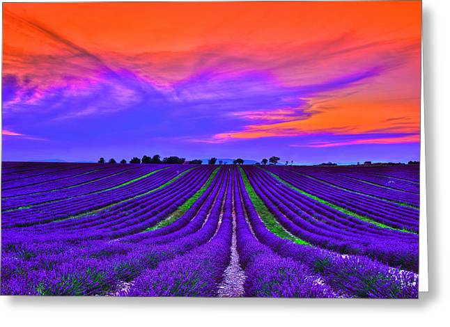 South Of France Greeting Cards - Purple Dream Greeting Card by Midori Chan