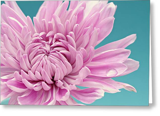 Pink Flower Prints Greeting Cards - Purple dream Greeting Card by Nastasia Cook