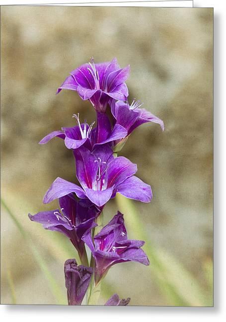 Purple Elegance Greeting Card by Kim Hojnacki