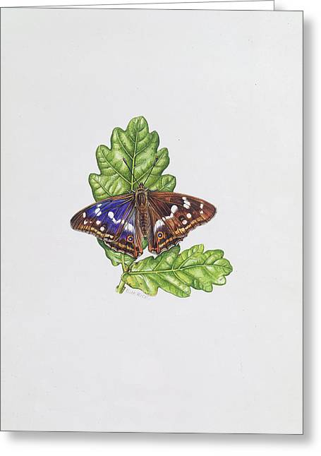 Botanicals Greeting Cards - Purple Emperor Butterfly On Oak Leaves Wc Greeting Card by Elizabeth Rice
