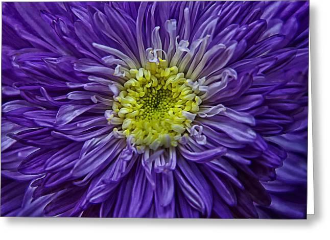 Purple Explosion Greeting Card by Joachim G Pinkawa