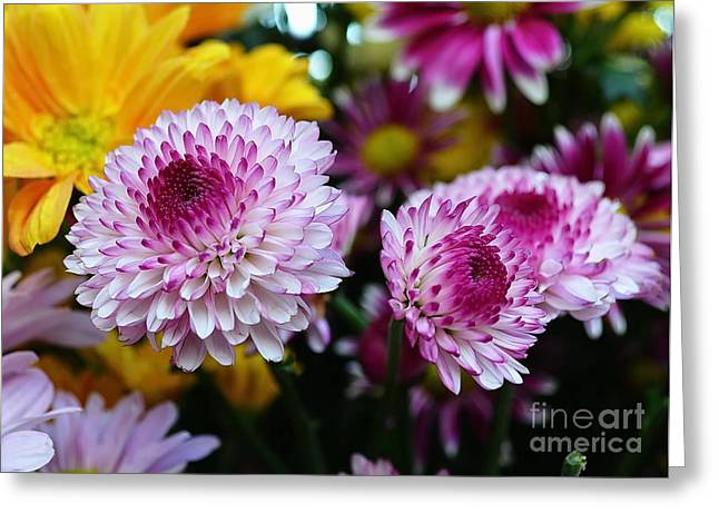 Michelle Greeting Cards - Purple Explosion Greeting Card by Michelle Meenawong