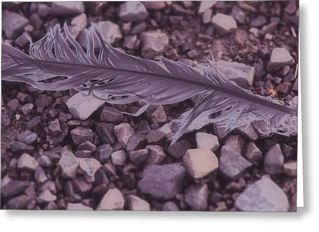 Windy Mixed Media Greeting Cards - Purple Feather Greeting Card by Dan Sproul