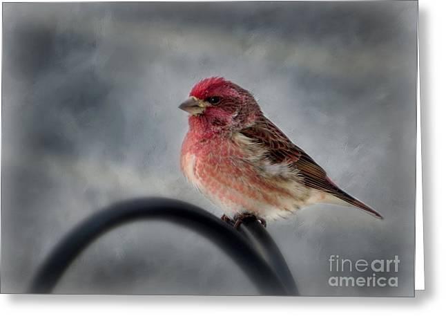 Snowy Day Greeting Cards - Purple Finch Greeting Card by Brenda Bostic
