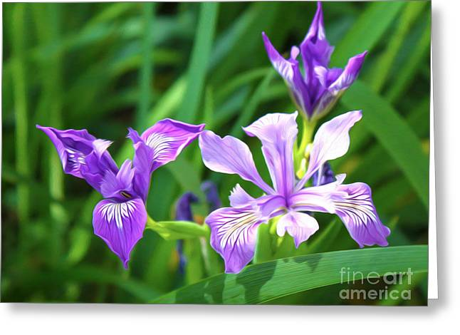 Purple Flower Greeting Card by Gregory Dyer