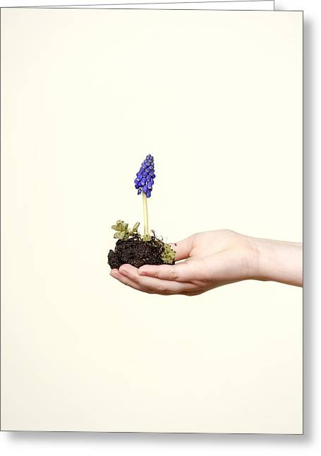 Vernal Greeting Cards - Purple Flower Greeting Card by Joana Kruse