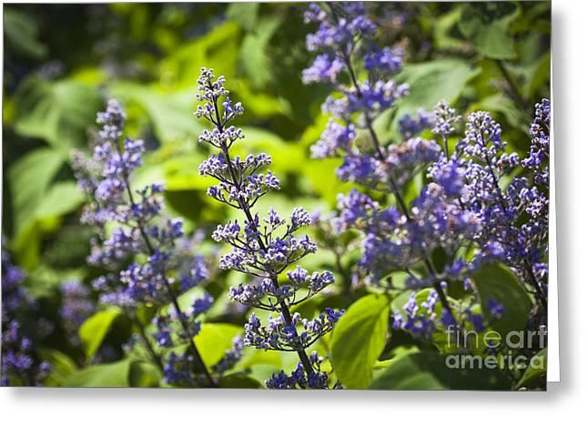 Flowers Miami Greeting Cards - Purple Flower Greeting Card by Juan  Silva