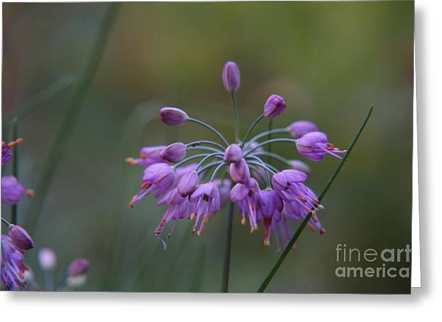 Faa Featured Greeting Cards - Purple Flower Greeting Card by Zori Minkova