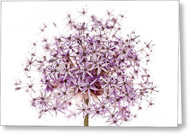 Star Shape Greeting Cards - Purple flowering onion Greeting Card by Elena Elisseeva