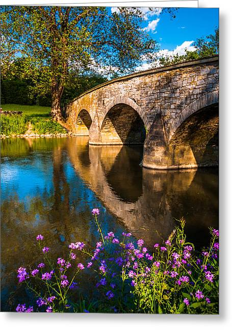 Civil War Battle Site Greeting Cards - Purple flowers and Burnside Bridge reflecting in Antietam Creek at Antietam National Battlefield MD Greeting Card by Jon Bilous