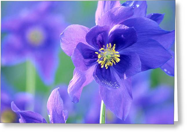 Landscape Photos Greeting Cards - Purple Flowers Greeting Card by Anonymous