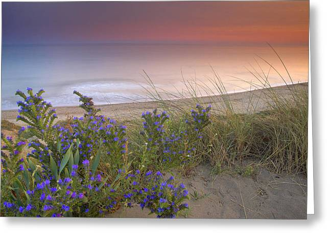 Blue Green Wave Greeting Cards - Purple flowers at the sea Greeting Card by Guido Montanes Castillo