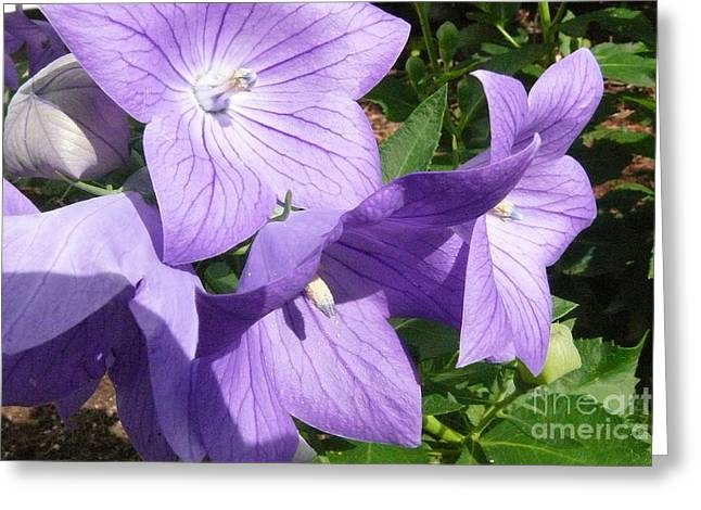 Betsy Bell Greeting Cards - Purple flowers Greeting Card by Betsy Cotton