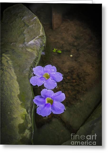 Purple Flowers Greeting Card by Patricia Hofmeester