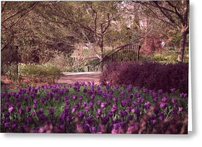Tulip Tree Digital Art Greeting Cards - Purple Garden Greeting Card by Mary Timman