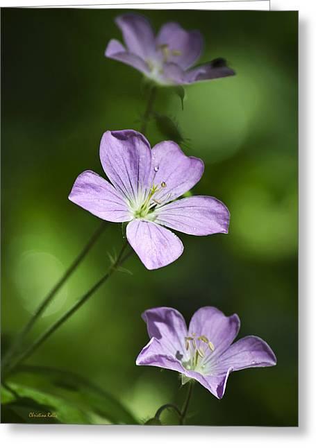 Macro Geranium Flower Greeting Cards - Purple Geranium Flowers Greeting Card by Christina Rollo