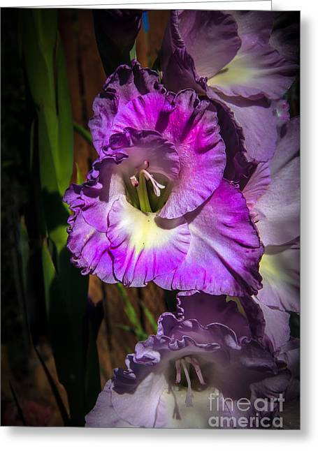Disambiguation Greeting Cards - Purple Glad Greeting Card by Robert Bales
